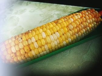 sweet corn life